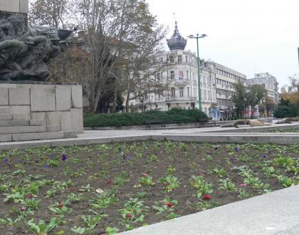 Нови цветя и храсти в централната пешеходна зона